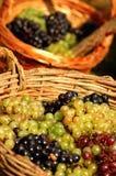 виноградина корзин Стоковое фото RF