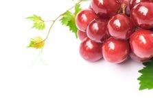 Виноградина крупного плана зрелая красная с лист на белой предпосылке, плодоовощ излечивает Стоковое Изображение
