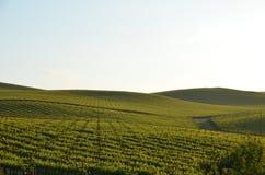 Виноградина fields Napa Valley на пути к Santa Rosa Стоковые Изображения