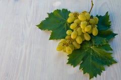 Виноградина Malvasia Стоковые Изображения