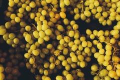 виноградины белые Стоковая Фотография RF