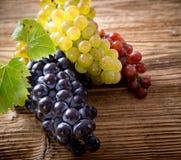 Виноградины вина на ветви лозы Стоковая Фотография RF