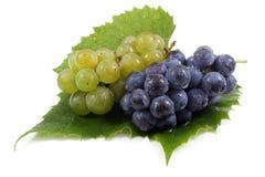 Виноградины вина с лист Стоковое Изображение RF