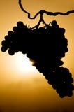 Виноградины в силуэте стоковые изображения