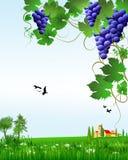 Виноградины и ландшафт иллюстрация штока