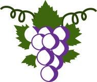 Виноградины и виноградины лист бесплатная иллюстрация