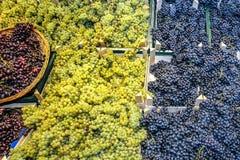 Виноградины и корзина Стоковое фото RF