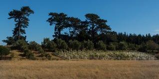 Виноградины крышки Стоковое Фото