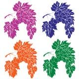 Виноградины на ветви бесплатная иллюстрация