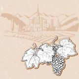 Виноградины перед винтажной сделанной эскиз к фермой виноградника иллюстрация штока