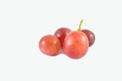 виноградины предпосылки свежие белые Стоковые Изображения RF