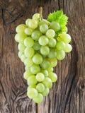 виноградины пука белые Стоковая Фотография