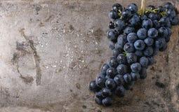 виноградины пука красные Стоковые Изображения RF