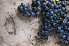 виноградины пука красные Стоковые Изображения