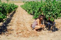Виноградины рудоразборки женщины в винограднике Стоковое Изображение RF