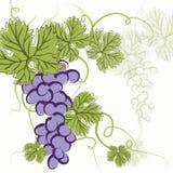 Виноградины сини EPS10 Стоковая Фотография