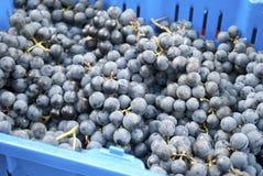 Виноградины согласия Стоковые Фотографии RF