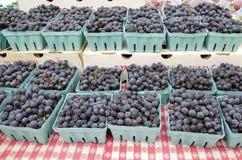 Виноградины согласия Стоковое фото RF