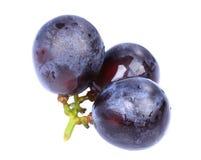 Виноградины согласия Стоковое Изображение RF