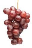 виноградины сочные Стоковые Фотографии RF