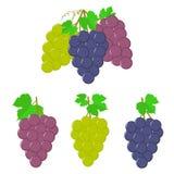 Виноградины с листьями Стоковое Фото