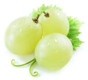 3 виноградины с малыми лист Стоковое фото RF