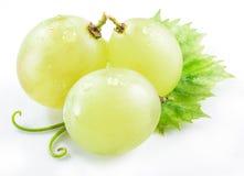 3 виноградины с малыми лист Стоковые Изображения
