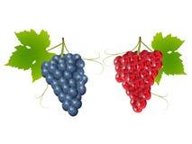 Виноградины бесплатная иллюстрация