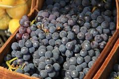 Виноградины 1 стоковые фото