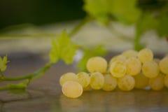 Виноградины Chenin Blanc Калифорнии Стоковые Фото