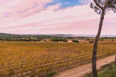 Виноградины St Tropez стоковые фото