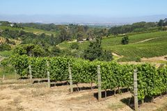 Виноградники благоустраивают в долине Constantia стоковая фотография rf