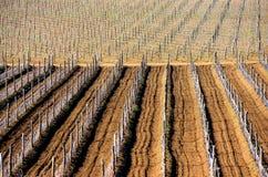 Виноградники весной Стоковые Фотографии RF