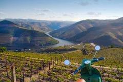 Виноградники вина порта Стоковые Изображения RF