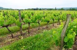 Виноградники виноградины, Франция сельская Стоковая Фотография