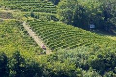 Виноградники в Италии с караваном стоковое фото rf