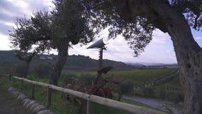 Виноградники в Италии сток-видео