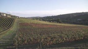 Виноградники в Италии акции видеоматериалы