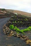 Виноградники в Ла Geria, Лансароте, Канарских островах, Испании Стоковое Изображение
