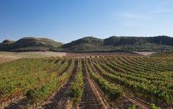 Виноградники в Наварре, Barbarin, Испании стоковая фотография