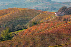 Виноградники в осени в Пьемонте, Италии Стоковая Фотография