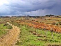 Виноградники в осени стоковое изображение