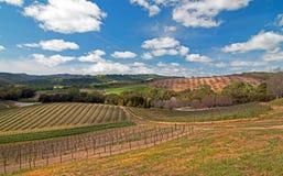 Виноградники в пейзаже винной страны Paso Robles стоковые изображения