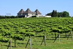 Виноградники в северном Georgia Стоковая Фотография