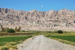 Виноградники в Cafayate, Аргентине Стоковая Фотография