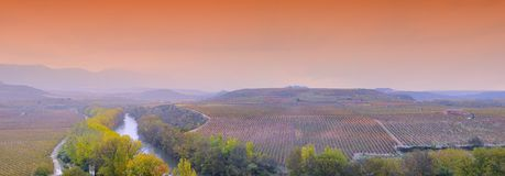 Виноградники в La Rioja, Испании Стоковая Фотография