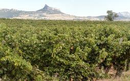 Виноградники в La Rioja стоковое изображение rf