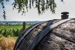 Виноградники в Mikulov, чехии Стоковые Изображения RF