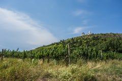 Виноградники в Mikulov, чехии Стоковые Фото