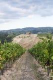 Виноградники в Oltrepo Pavese (Италия) стоковые изображения